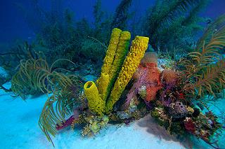 ägyptische Rote Meer